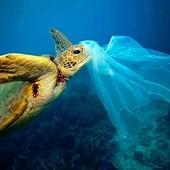 *Journée mondiale du sans sac plastique*  Ce Samedi 03 Juillet c'est la journée mondiale sans sac plastique, ils représentent un danger pour l'écosystème marin et terrestre.  Il suffit d'une seconde pour fabriquer un sac plastique, qui sera utilisé en moyenne pendant 20 minutes, et il mettra entre 100 à 400 ans à se désagréger.  Ensemble, réduisons notre empreinte plastique.  #journeemondialedusanssacplastique #protegeonsnosoceans #5oceanssemobilise #permisbateaux